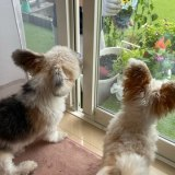 夏の寄せ植えとお外に出たい犬