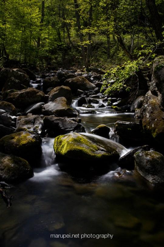 駒出池キャンプ場の中を流れる小川