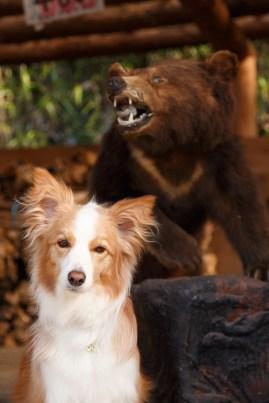レイラと熊