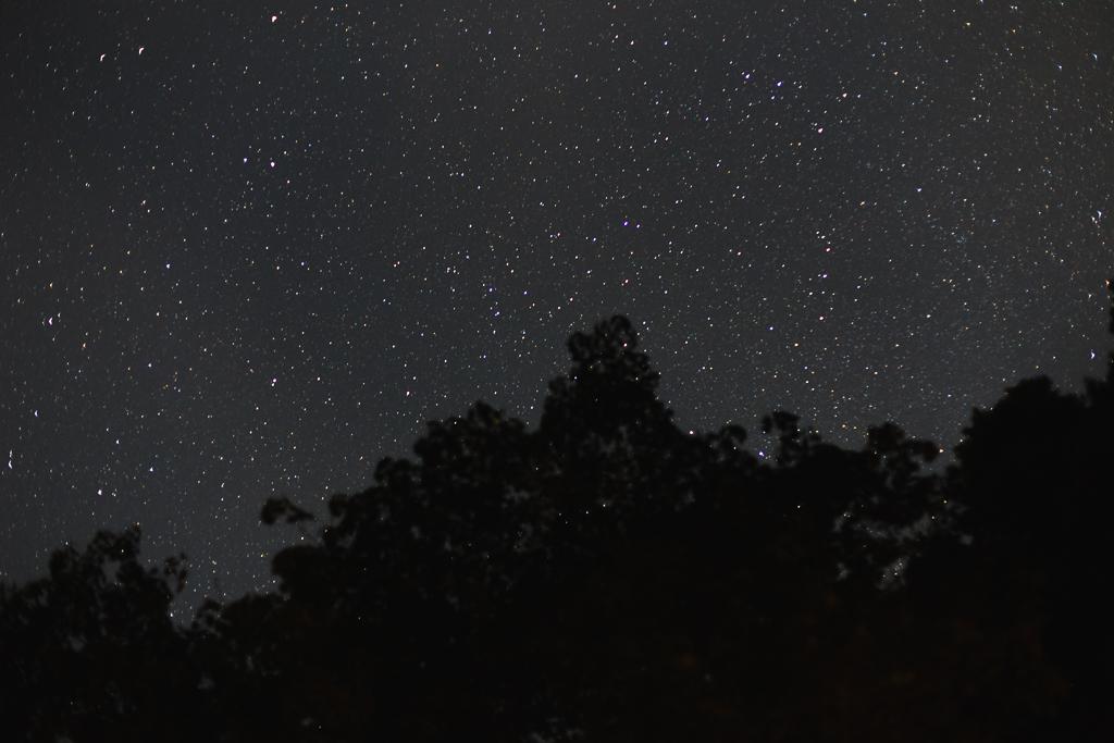 道志の森 星空