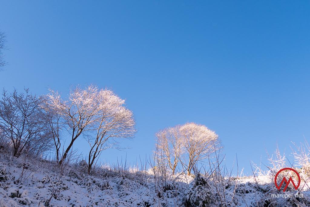 2月の高尾山
