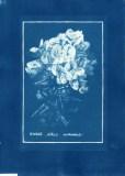 cyanotype003-for-web