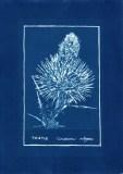 cyanotype007-for-web