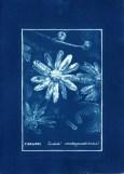 cyanotype011-for-web