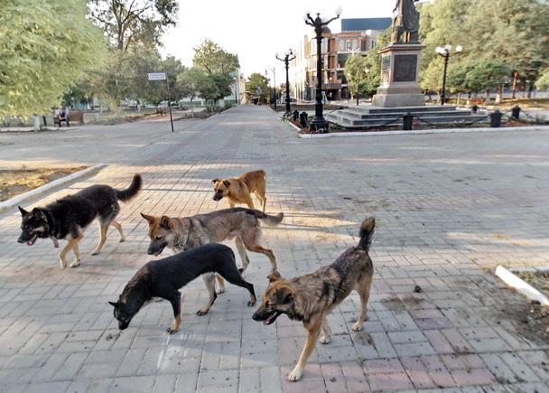 Картинки по запросу бродячие собаки херсон
