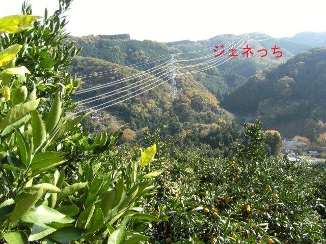 みかん山から見る景色最高で
