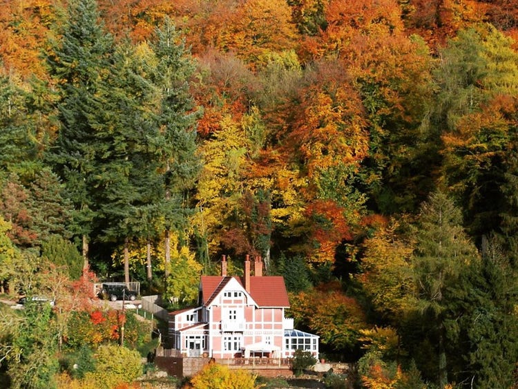 Screenshot of Otis and Jean Milburn's house from Sex Education with autumn trees all around.