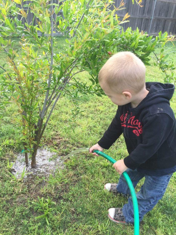 Little blond boy watering a small tree