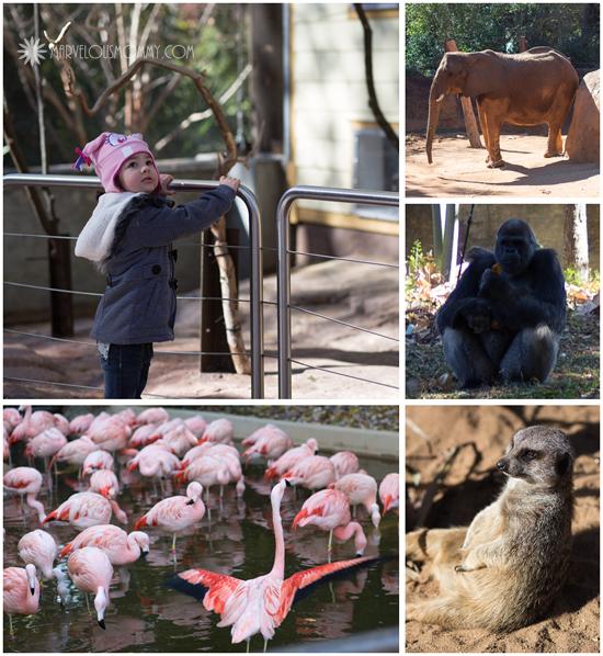 Zoo Atlanta Pics