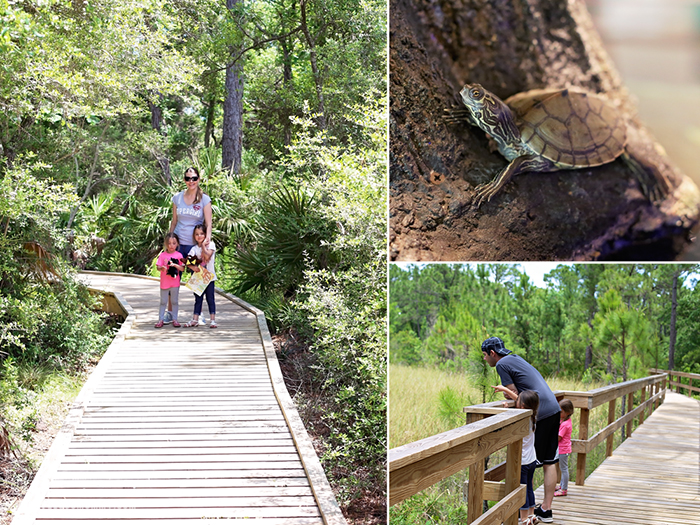 St George Island _ apalachicola research reserve