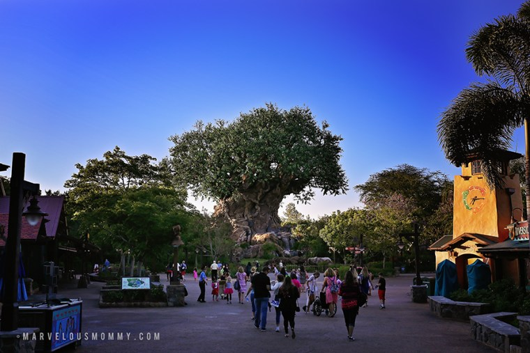 Disney World-4507-Edit_BLOG