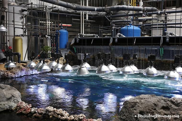 GA Aquarium-6803-2