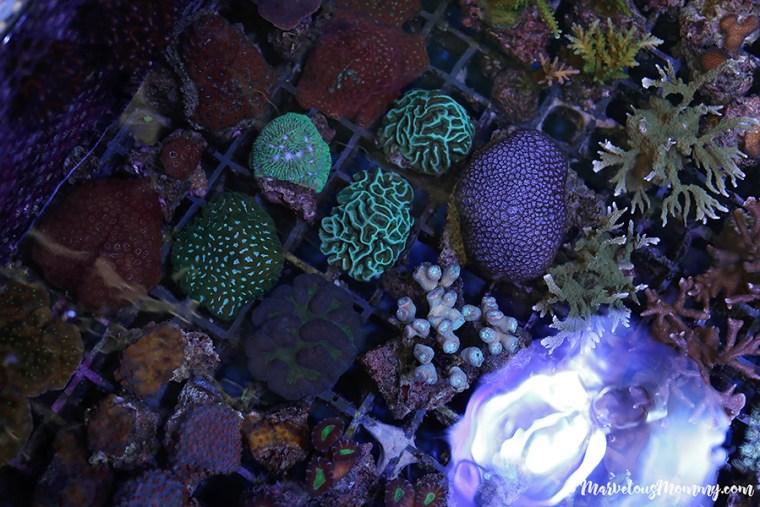 GA Aquarium-6831-2