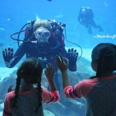 GA Aquarium Oct 2017-3701-BLOG