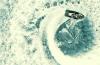 anderson-paak-freddie-gibbs-madlib-video-giannis