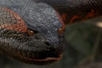 anaconda nueva pelicula sony remake