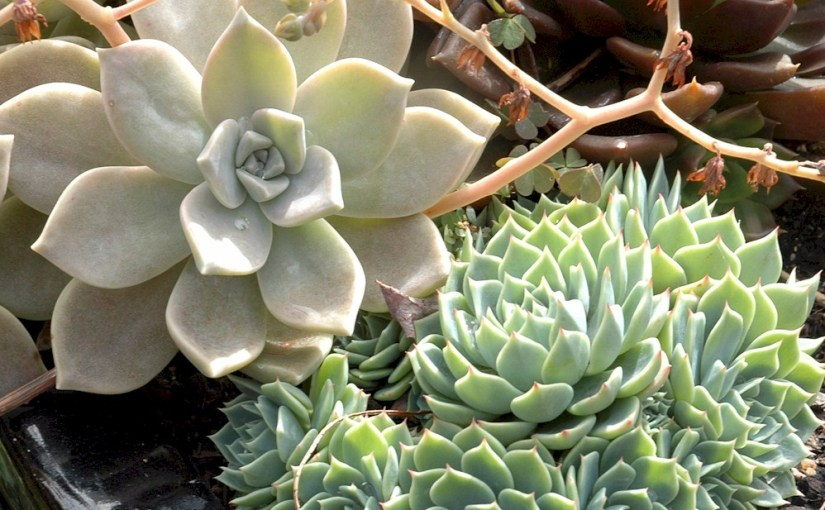 Prepare Your Garden for Fall Succulents