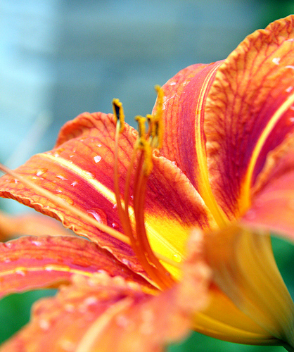 Deck Out Your Garden in Spring's Hottest Colors