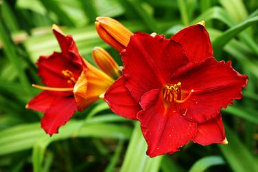 Color in Your Perennial Garden