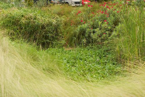 Solve run-off with a rain garden