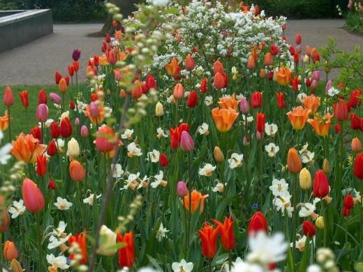 Jacqueline van der Kloet's Tips for Planning a Spring Tulip Garden