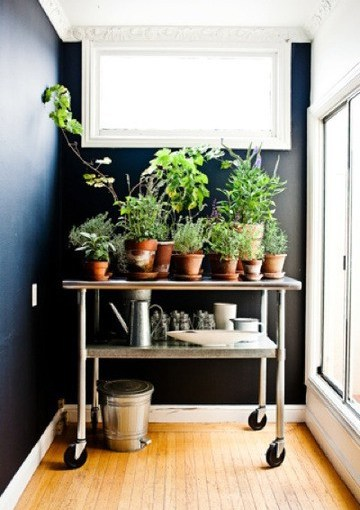 Winter Care Tips for Those Houseplants