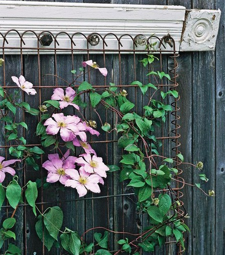 The Lavish Look of a Garden Trellis