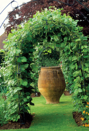 The Beauty of Growing a Garden Vertically