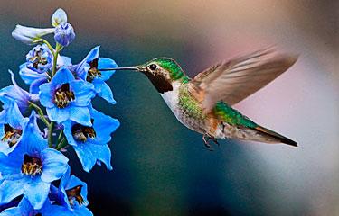 Attracting Hummingbirds to a Garden