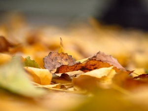 Make the Most of Autumn Leaves When Gardening
