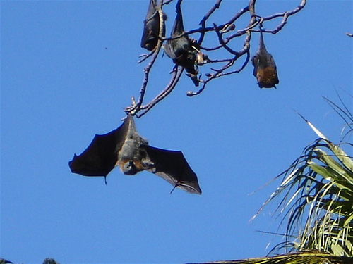 Why Bats Can be a Great Addition to Your Garden