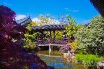 Chinese Gardens, late Springtime