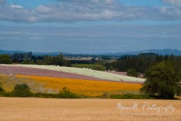 Silverton, Oregon; South on Cascade Hwy then West on Kauffman Rd