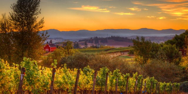 Sunset evening in the Chehalem Valley
