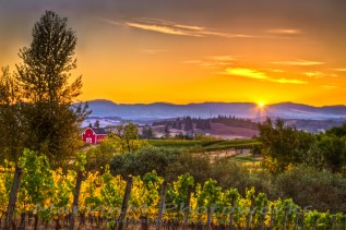 Chehalem Valley Sunset