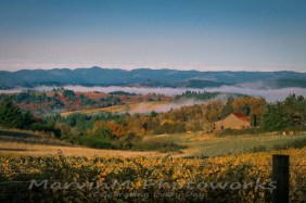 vineyard, fog, cascade range, wilamette, vineyard