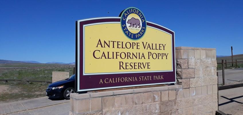 カリフォルニア州の花、アンテロープ・カリフォルニアポピー保護区。