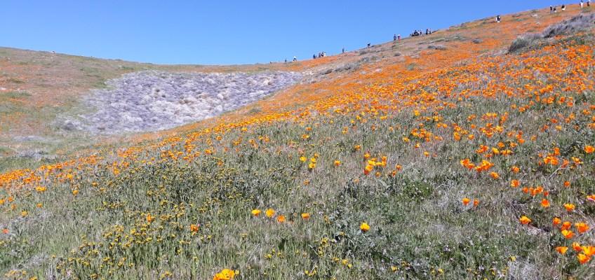 ポピーが咲き乱れる国立公園内。