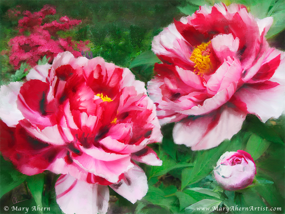 Fire Flame Peony - Available in the Mary Ahern Art Store