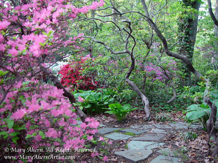 Bluestone path under the mountain laurels in the garden of the Artist, Mary Ahern