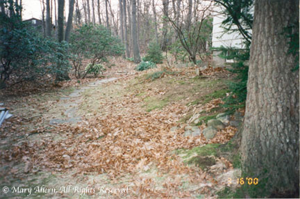 View of rear garden looking north in 2000