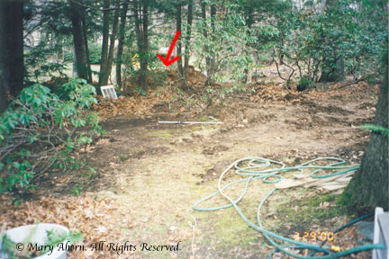 The red arrow marks some of the berm we had built as a buffer to the street
