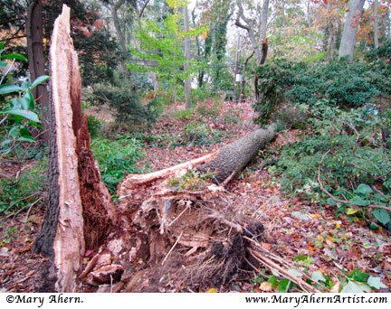 Hurricane Sandy Tree Damage
