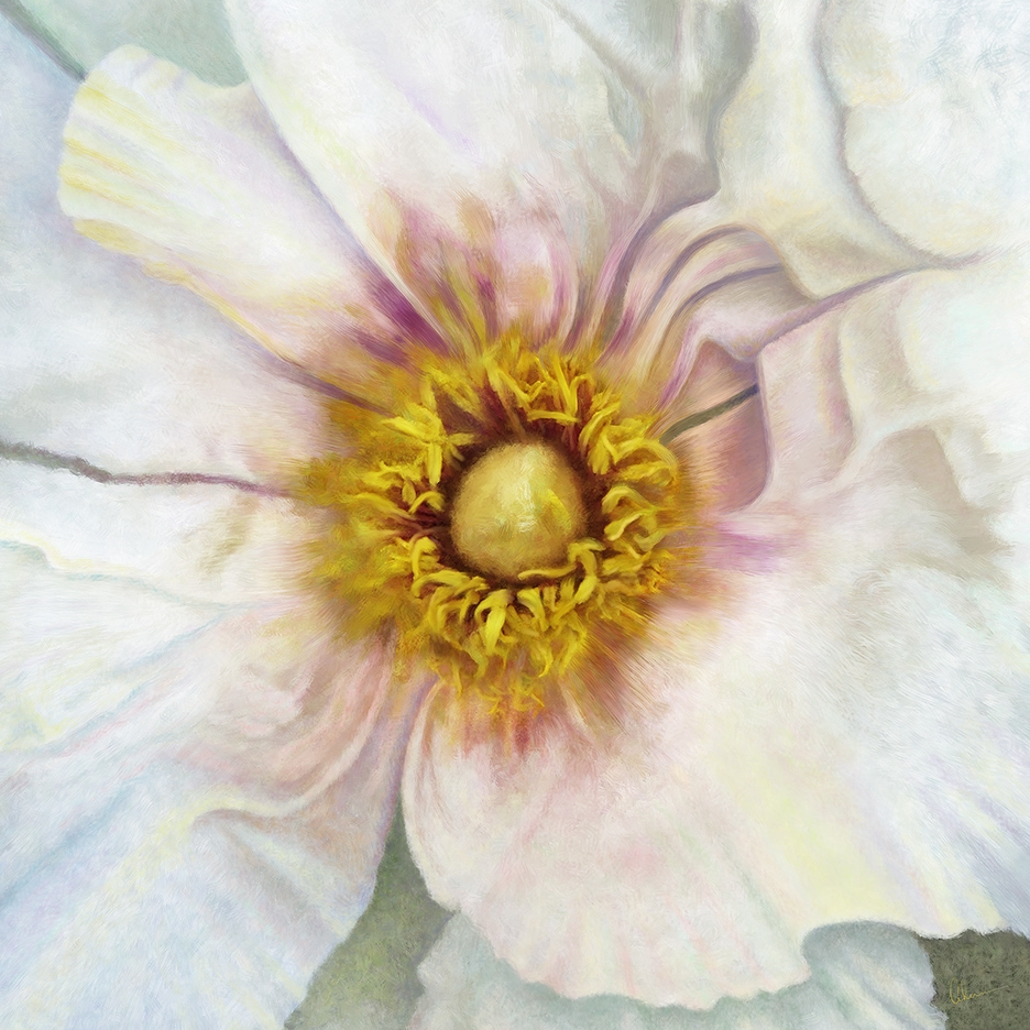Single White Peony Squared painting by the artist, Mary Ahern