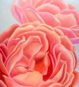 "We are Sisters - Coral Roses 30x24""GW. Oil on Canvas"