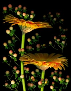 Gerbera Daisies with Hypericum. Original Art by Mary Ahern