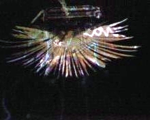 bird projection