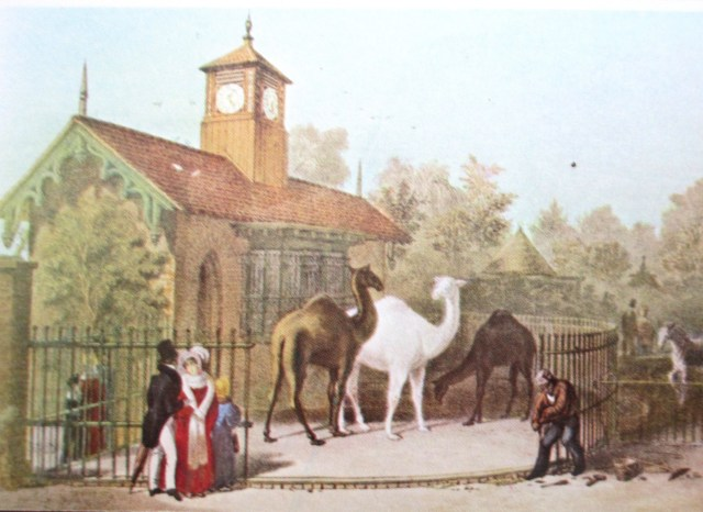 scharf - camel house london zoo