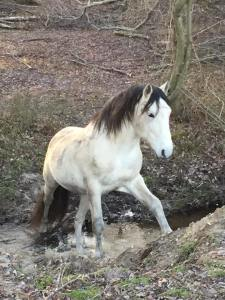 My Andalusian Stallion