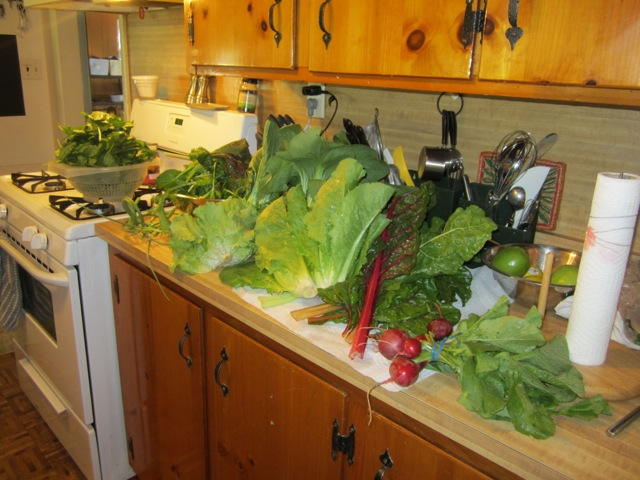 Photo of vegetables from farm share